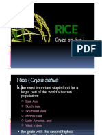 Rice Origin and Morphology