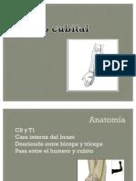 Nervio Cubital[1]