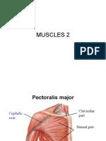 Class 6 Muscles 2