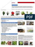 indoor-plant-presentation
