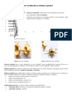 Coloana vertebrala si maduva spinarii