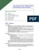 Tema43 Partes Sistema Circulatorio