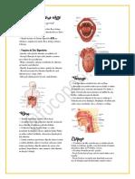 Resumo Sistema Digestório Alto