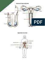 Sistemul Reproducator