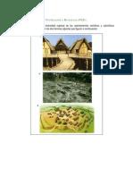Primera_Prueba_de_Evaluación_a_Distancia