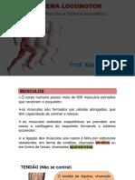 SISTEMA LOCOLOTOR - MUSCULAR