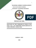 PROYECTO DE TESIS CEBOLLA HUANUCO