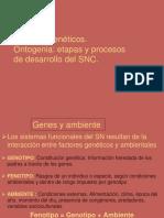 margulis_factores_geneticos