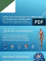 Sistema Ósteo Artro Muscular