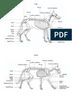 anatomia cao e gato