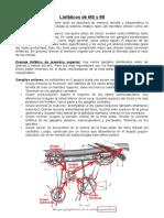 Linfáticos.pdf