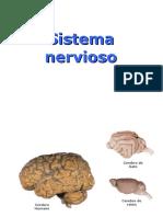 sistema-nervioso-y-aprendizaje-i-5343