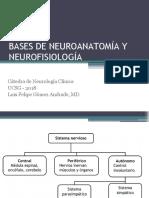 Charla Neuroanatomía