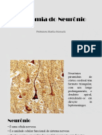 Anatomia do Neurônio