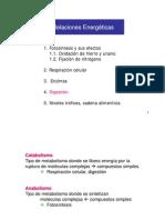 CV 8c Digestion y Niveles Troficos