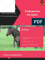Endometrite Em Éguas