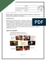 GUÍA DE SOCIALES PERIODO II-doc