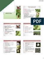 4. Algodón-Picadores de órganos reproductivos