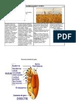 Cerealele pedagogie