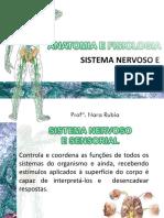 AULA 4 Sistema Nervoso e Sensorial-convertido