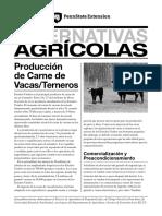 Produccion de carne de vacas  y terneros