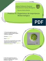 Práctica 1 Organismos de importancia Biotecnológica