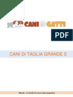 Taglia Grande 5