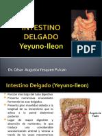 Páncreas, Intestino Delgado y Grueso
