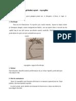 Curs 14 Fungii Hialini Septati