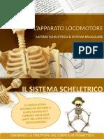 L'APPARATO LOCOMOTORE-sistema scheletrico