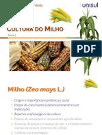 Cultura do Milho