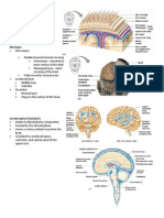 Handouts - Nervous System and Brain Parts 4 - 5
