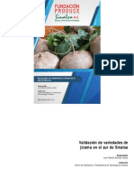 Validación de variedades de jícama en el sur de Sinaloa