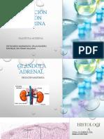Evaluación función endocrina