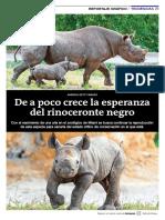 De a poco crece la esperanza del rinoceronte negro