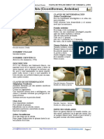 125.bubulcus-ibis