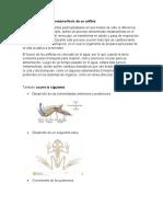 características de la metamorfosis de un anfibio