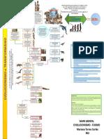 EVOLUCIONISMO - FIJISMO  y RESPUESTA  Mariana Torres Cortés 902