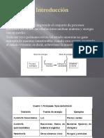 Presentacion Autotrofos, Heterotrofos y Quimioautotrofos. Nutricion Celular]