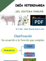 3-órganos del sistema inmune