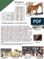 NATHALIE  Pedigree & lignée Stamm 2543 -RBCStud