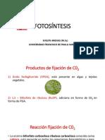 Ciclo de Carbono