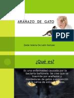 ARAÑAZO  DE  GATO