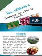 cultivodecebolla-161017150644