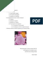 ClaseApoptosis