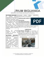 BACTERIUM_BIGUANIDA