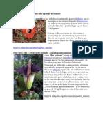Flor mas Grande y pesada del mundo PDF