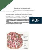 Roma II Arquitectura Civil.tarea 6