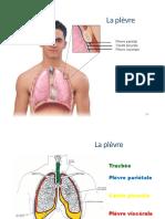 Sys.respiratoire partie 2