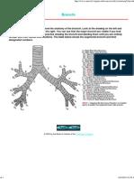Bronchi Anatomy